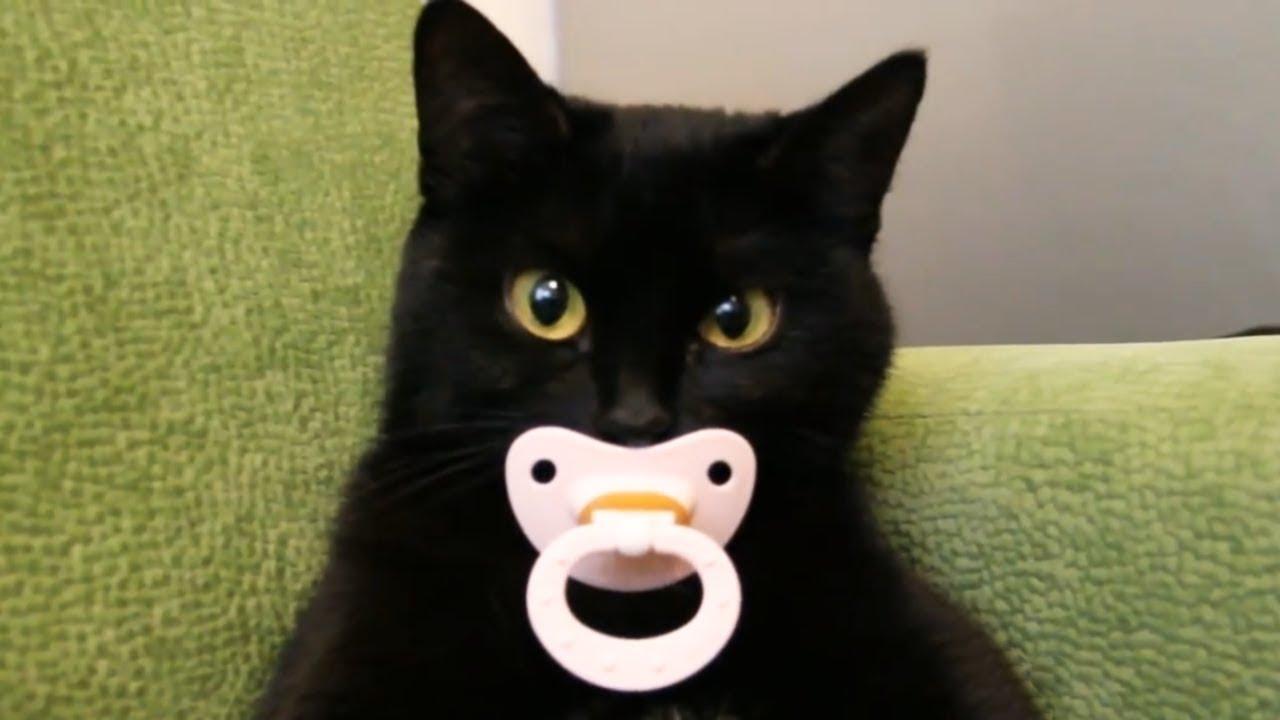 Смешное и интересное видео с котами и кошками