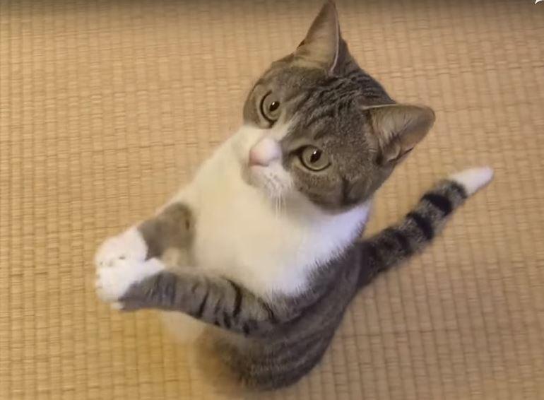 Угарные видео приколы с котами