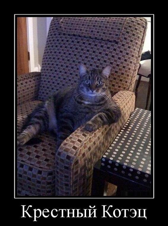 крестный кот