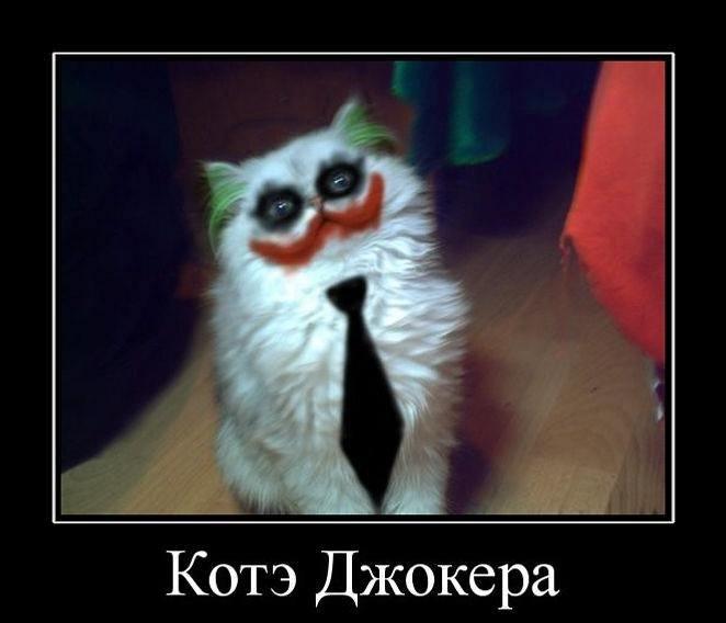 кот джокера