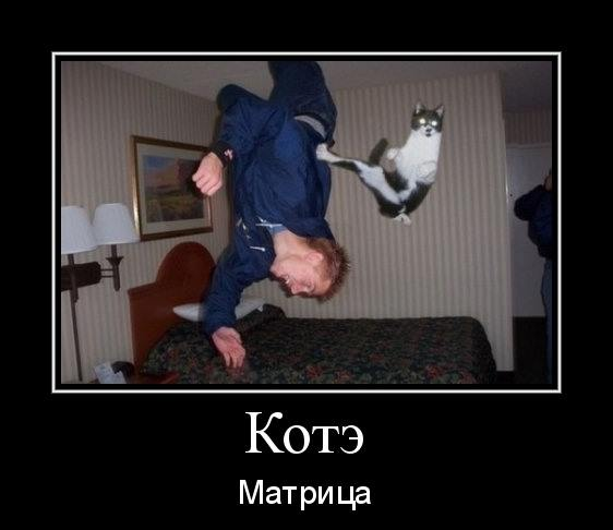котэ-мартица