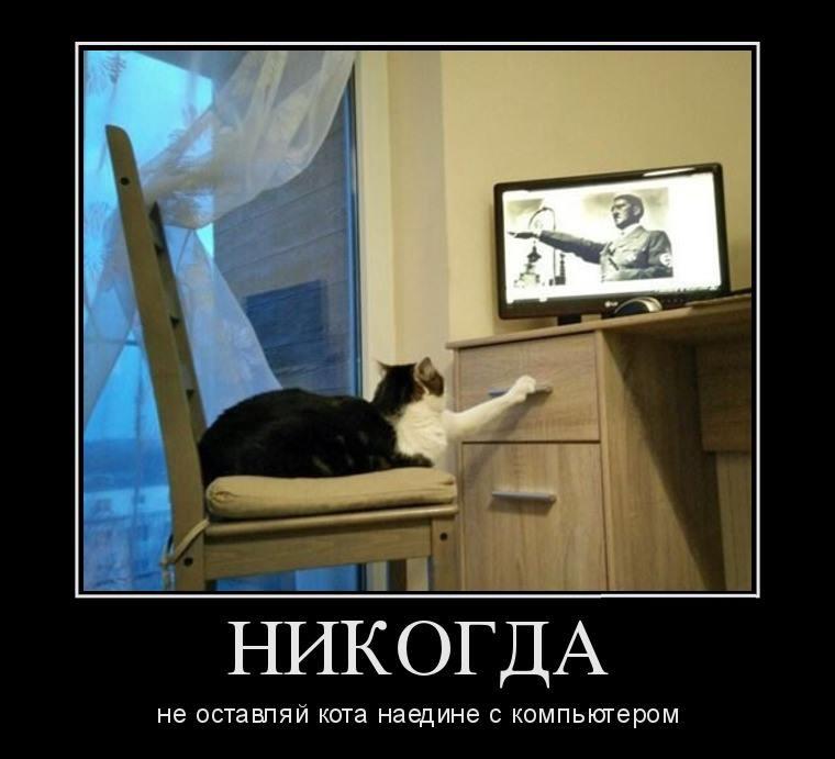 не оставляй кота с компьютером наедине