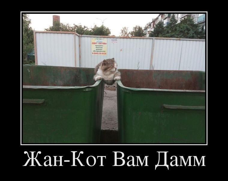 жан-кот вам дамм