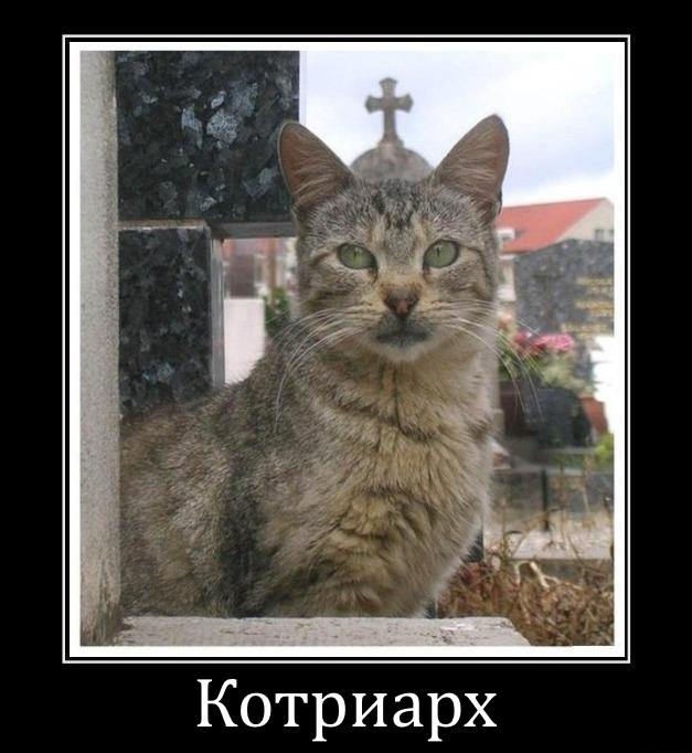 котриарх