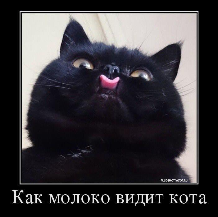 как молоко видит кота