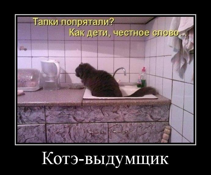 кот выдумщик