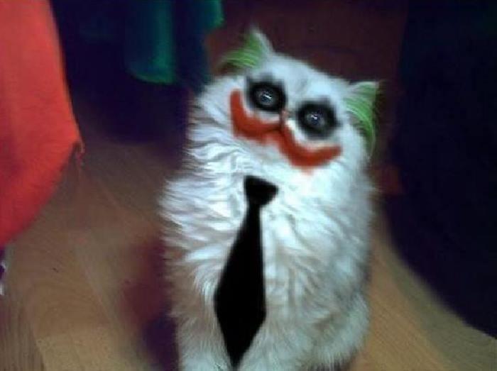 Смешные картинки про кошек с надписями