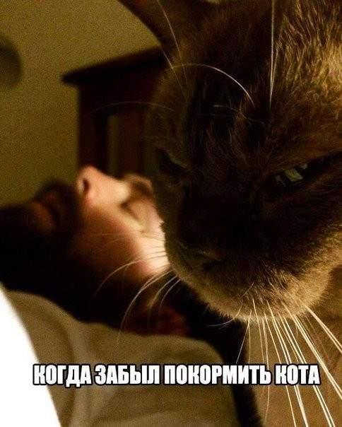 когда забыл покормить кота