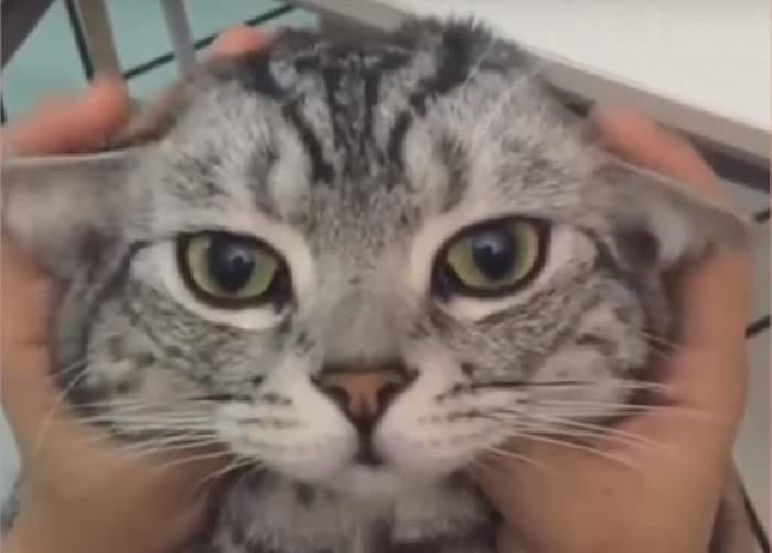 Видео с забавными и милыми котятами и кошками