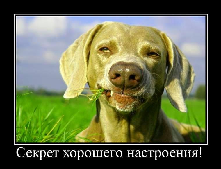секрет хорошего настроения