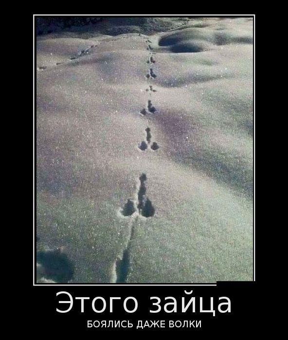 этого зайца боялись даже волки