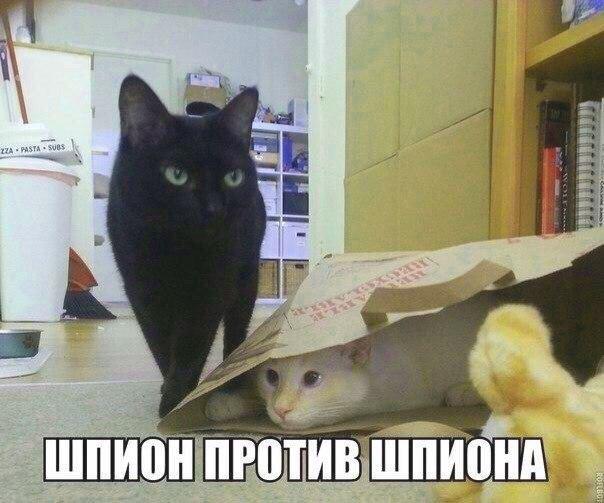 шпион против шпиона