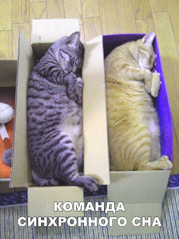команда синхронного сна