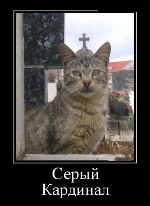 серый кардинал