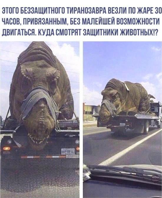бедное животное