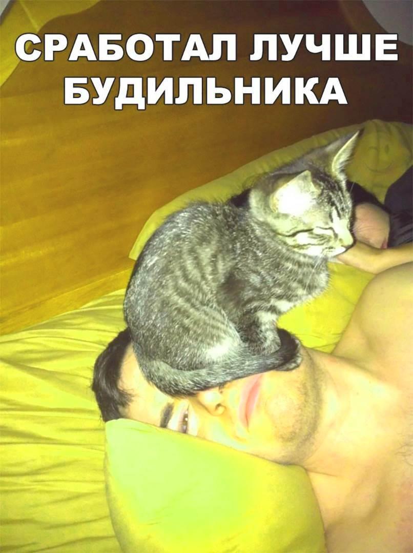 лучше будильника