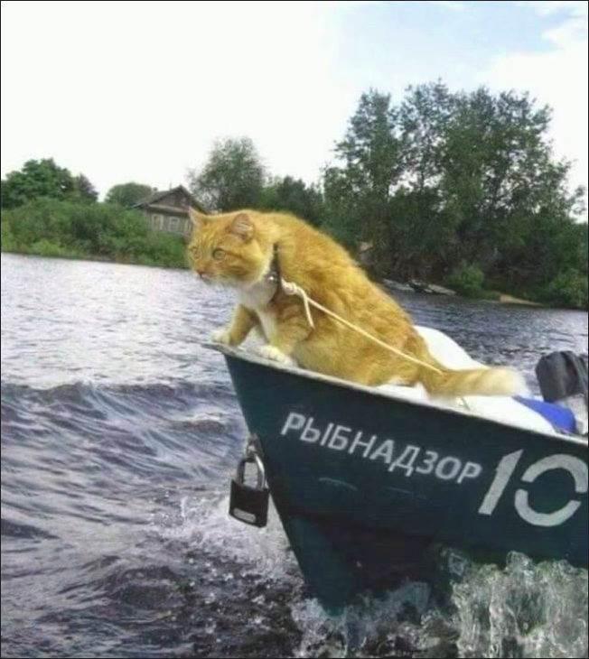 рыбнадзор
