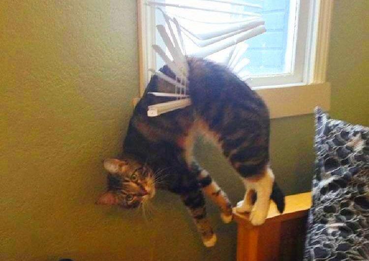 10 самых смешных кошачьих неудач